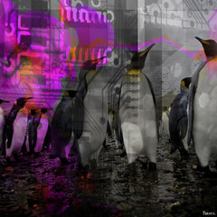 Penguins in Color
