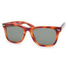sherwood tortoise sunglasses