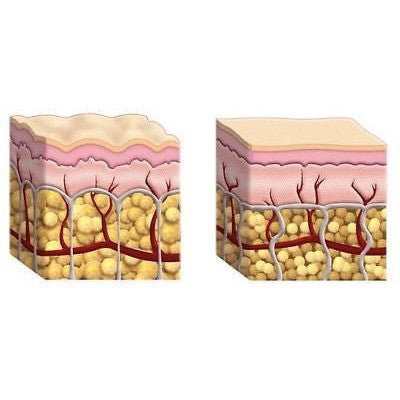 50 gm Hydrolyzed Bovine COLLAGEN POWDER Protein Firm - ModelSupplies
