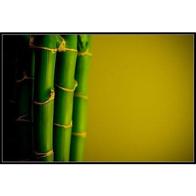 Bamboo Extract 100% Pure Ing Silica 4 oz Hair Care Treatment for Damaged Colored - ModelSupplies
