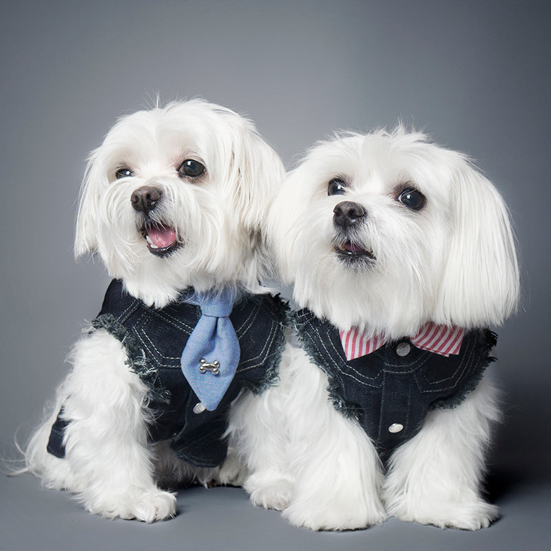 Cool Pups Pastel Red Collar and Fancy Ties Set