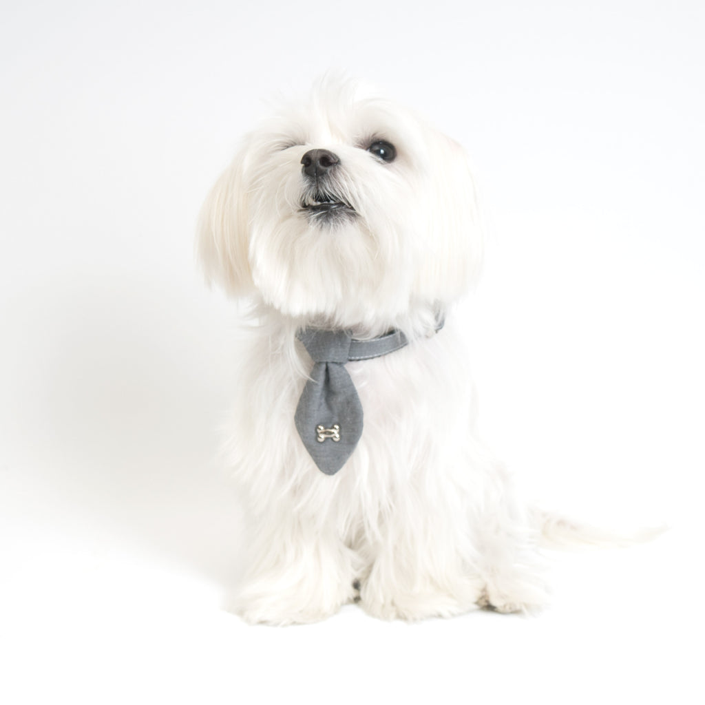Modern Pups Gray Collar and Fancy Ties Set by United Pups