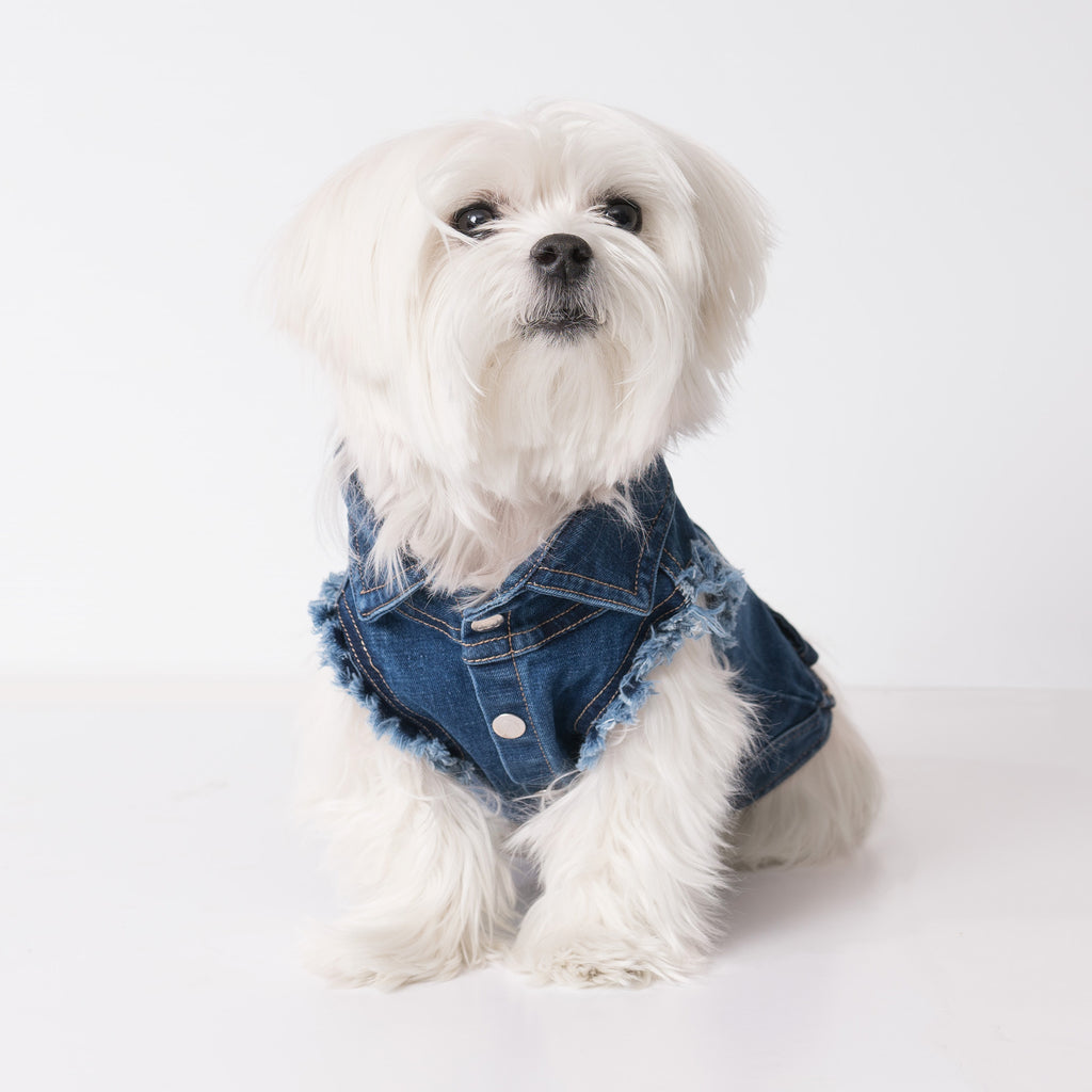 Chill Pups Denim Blue Fashion Jean Jacket for Dog from United Pups