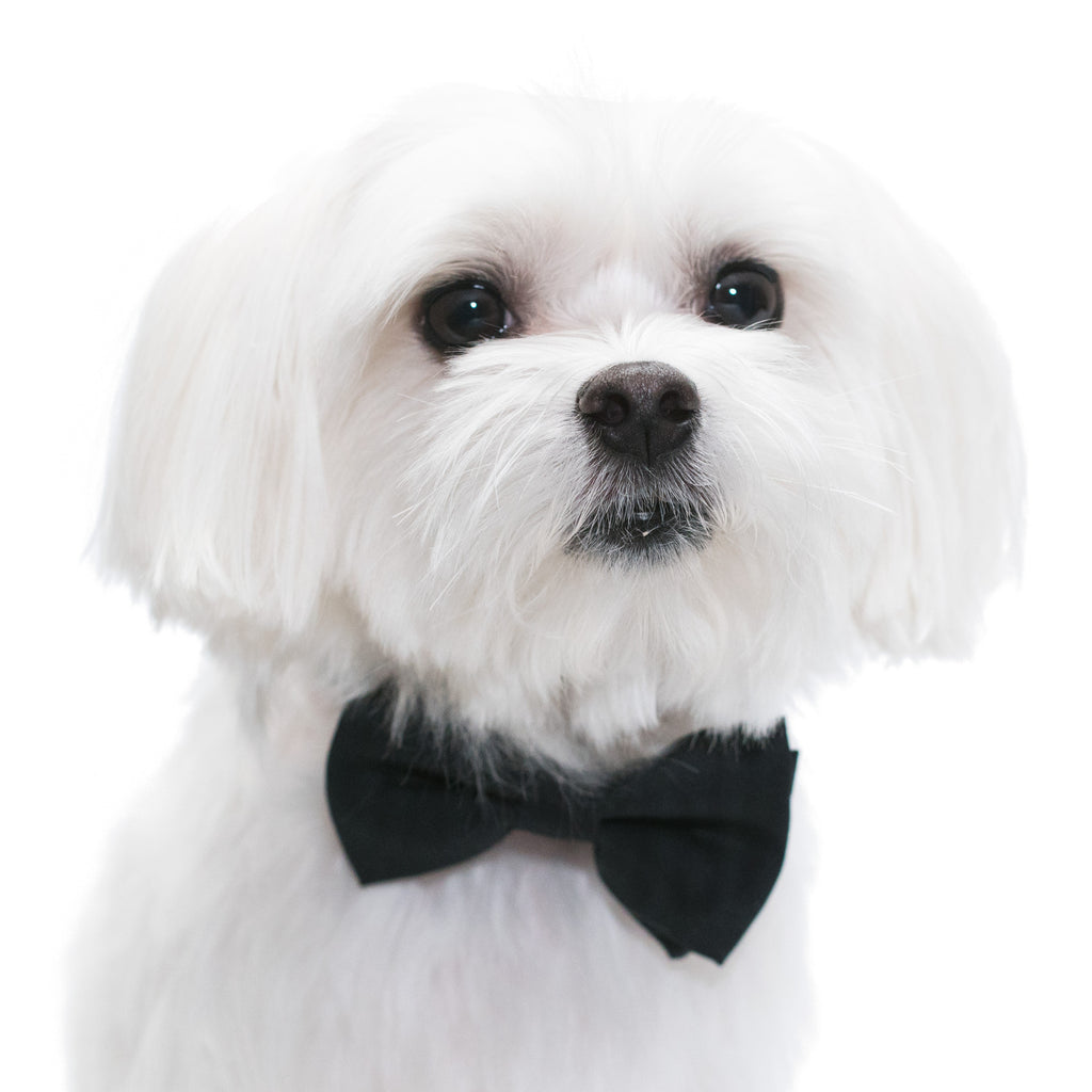 Elegant Pups Classy Black Collar Bow Tie and Leash for Dogs by United Pups