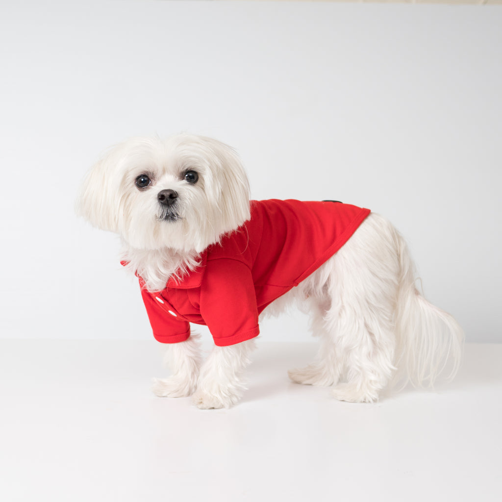 Maltese Dog in Cool Pups Red Polo Shirt for Dogs from United Pups