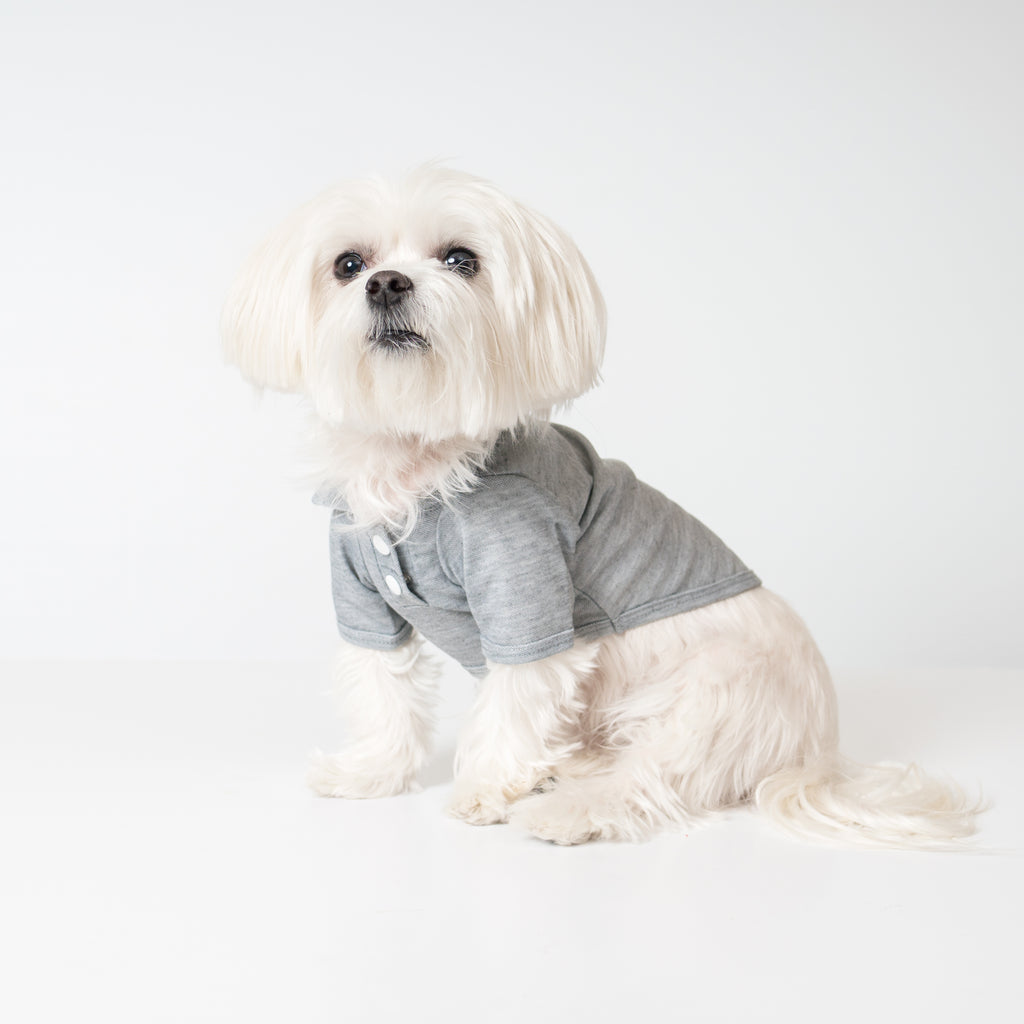 Maltese Dog in Modern Pups Gray Polo Shirt from United Pups