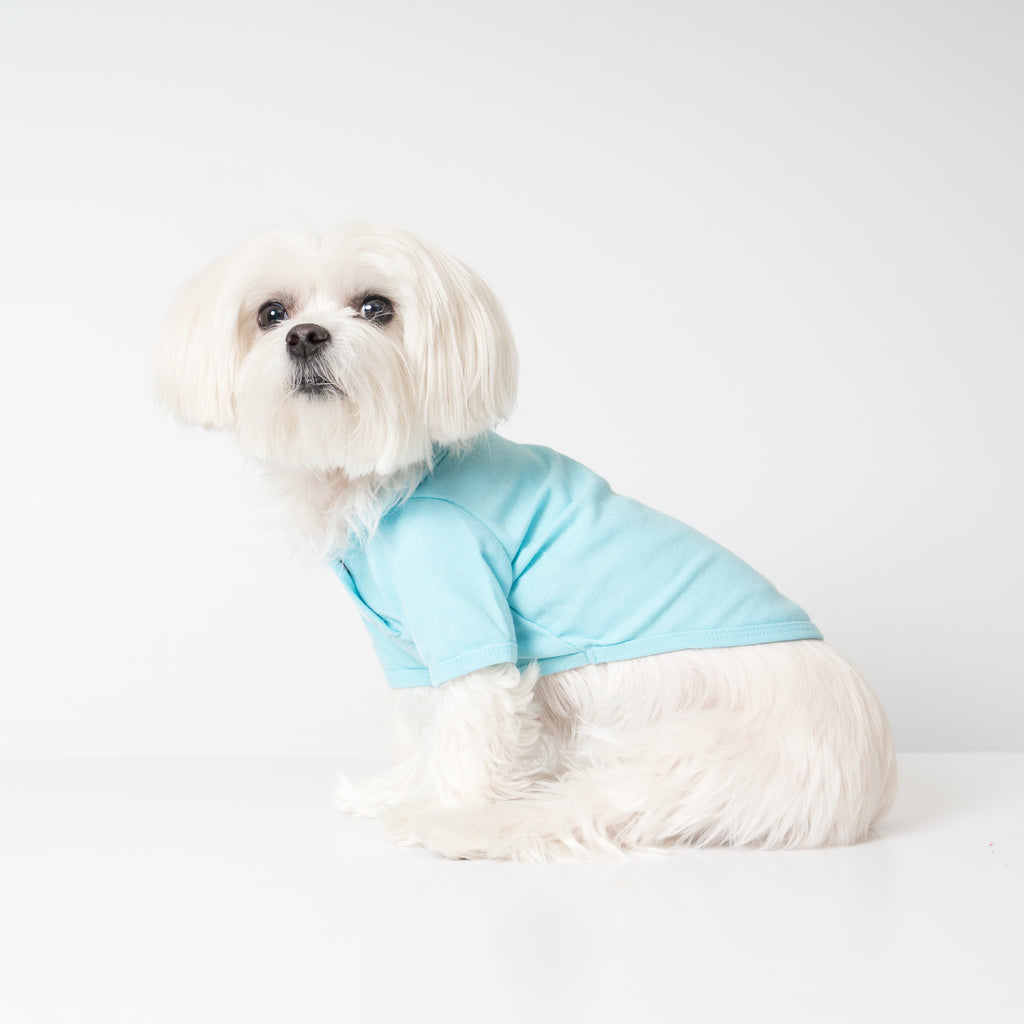 Maltese Dog in Chill Pups Blue Polo Shirt for Dogs from United Pups