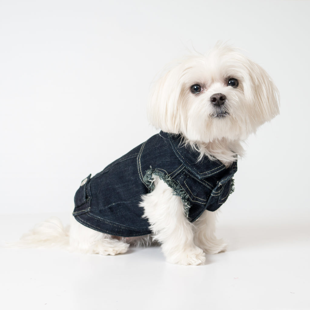Chill Pups Navy Blue Fashion Jean Jacket