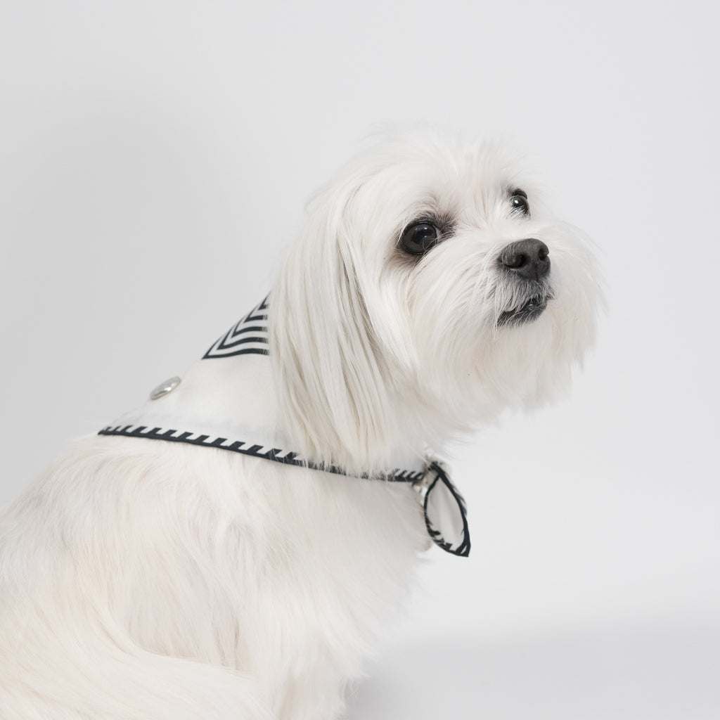 Modern Pups Black Silk Striped Bandana with Accessories by United Pups