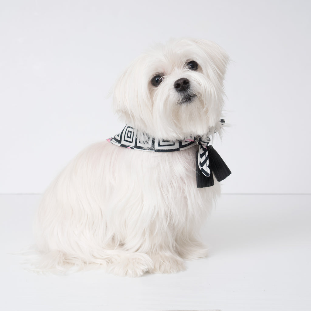 Modern Pups Ice Cream Bandana with Tassels on a Maltese Dog.  Pictured is size small. Tassels can be on front or back of the pup.