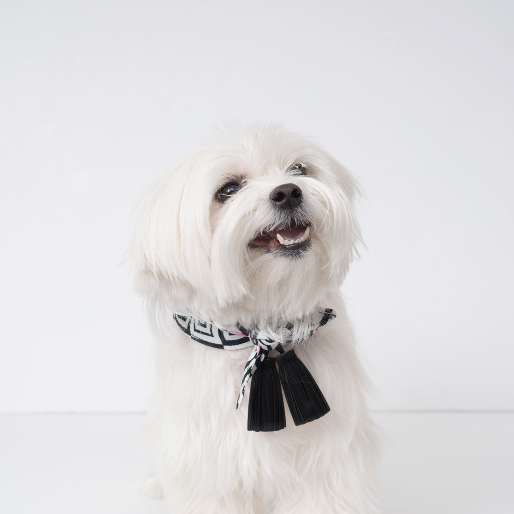 Modern Pups Ice Cream Bandana with Tassels on a Maltese Dog.  Close up.