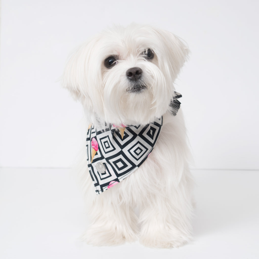 Modern Pups Ice Cream Bandana with Tassels on a Maltese Dog.  Pictured is size small.
