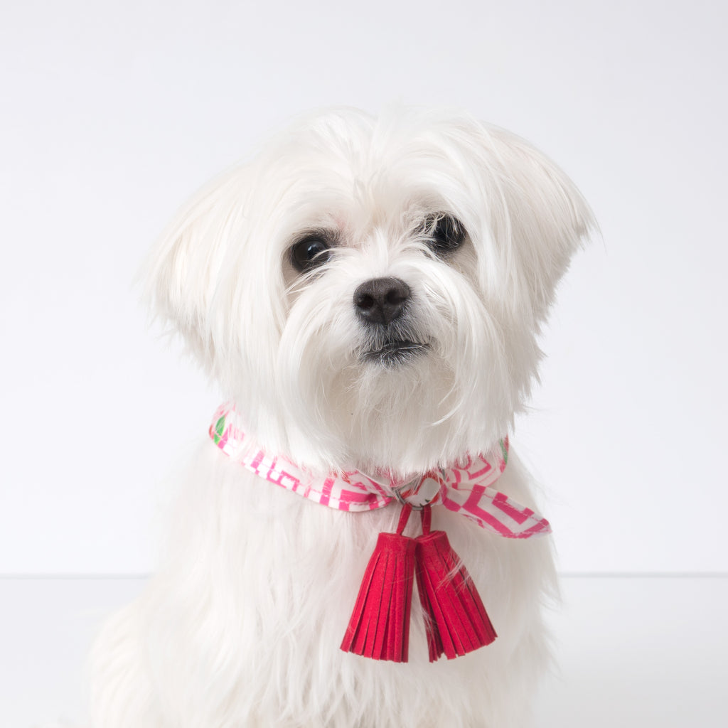 Cool Pups Red Apple Bandana with Tassels that can be on front or back.  Pictured on a Maltese dog.