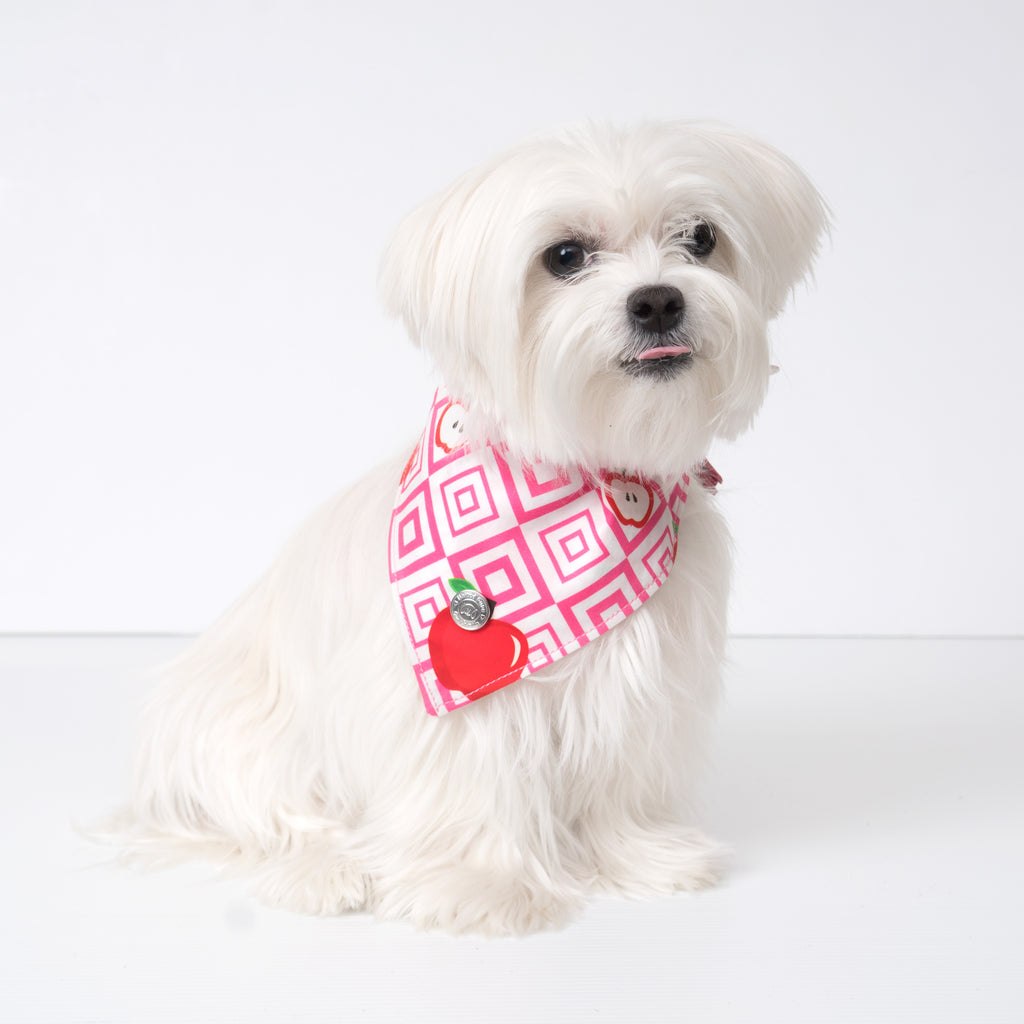 Cool Pups Red Apple Bandana with Tassels on a Maltese dog.  Pictured is small size.