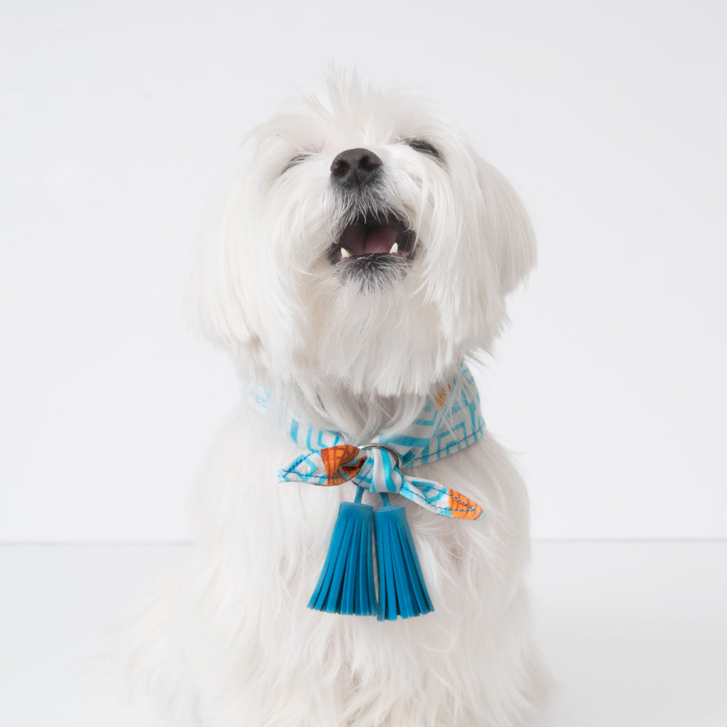 Chill Pups Blue Peanut Butter Bandana with Tassels that can be on front or the back.  Pictured is small on a maltese dog.