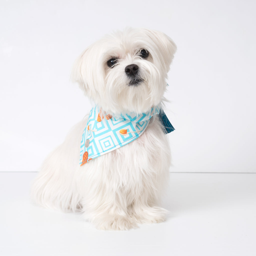 Chill Pups Blue Peanut Butter Bandana with Tassels on a Maltese dog. Pictured is size small.