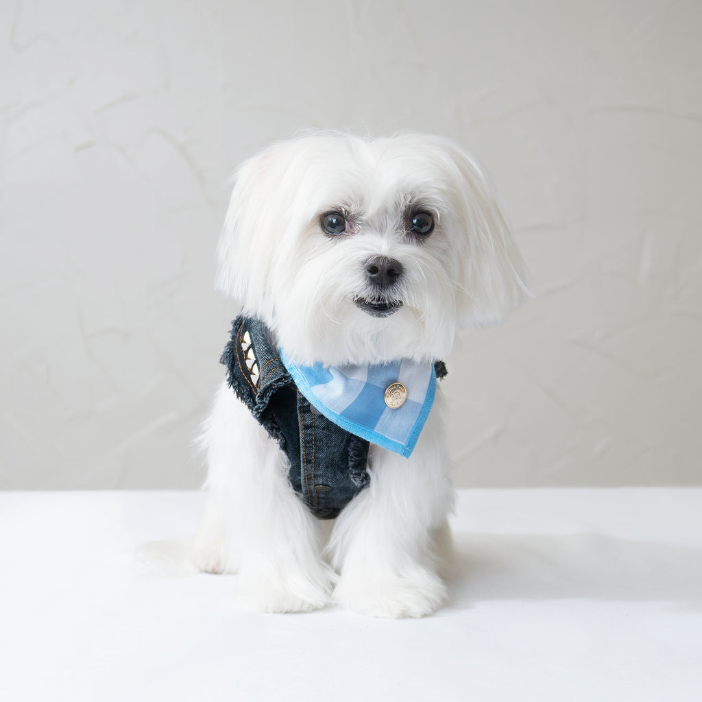 Chill Pups Blue Gingham Bandana with Accessories