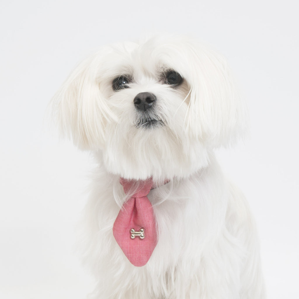 Cool Pups Pastel Red Collar and Fancy Ties Set by United Pups