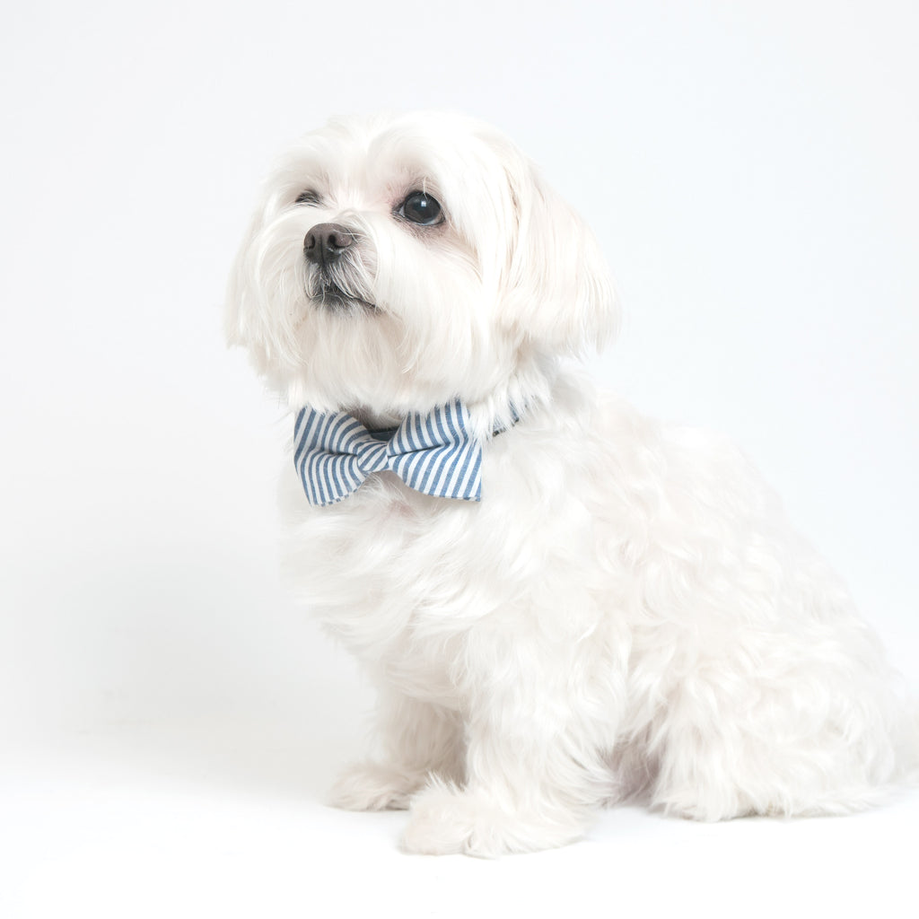 Chill Pups Blue Collar and Fancy Ties Set by United Pups
