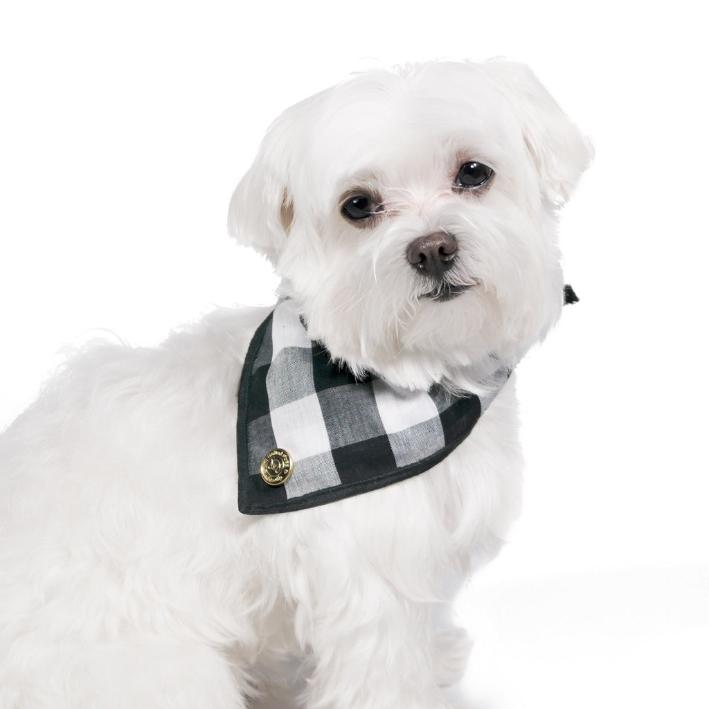 Modern Pups Classic Bandana with Accessories for Dogs by United Pups