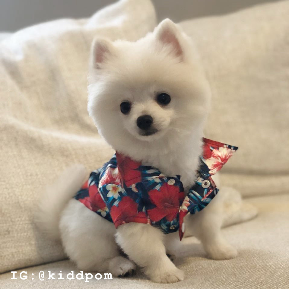Modern Pups Black Hawaiian Shirt