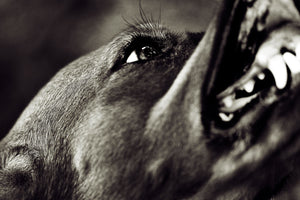 The Pitfalls of Using Punishment in Dog Training