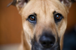 Decoding Your Dog: The Eyes