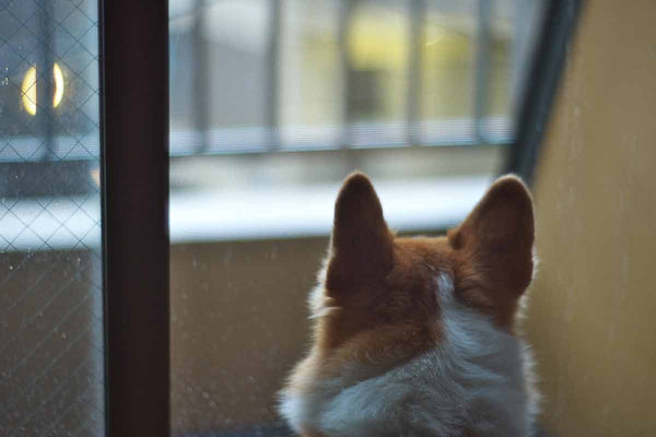 5 Rainy Day Activities for You and Your Dog