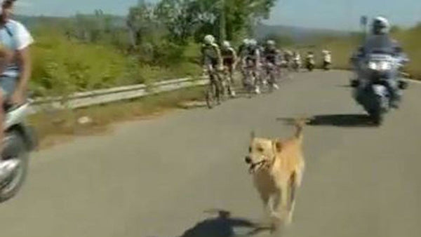 Dog attacks and leaves peloton behind