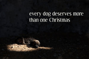 Every Dog Deserves More Than One Christmas