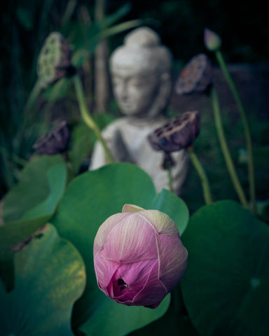 From Art To Skincare, We Explore The Legend Of The Lotus Flower