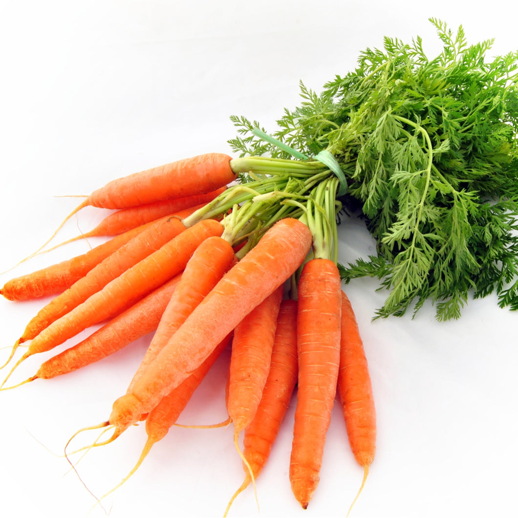 Bunch of Fresh Local Carrots