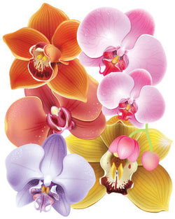 Colorful Orchids Graphic Art Illustration Print