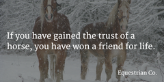 12+ Surprising Tips for First Time Horse Owners