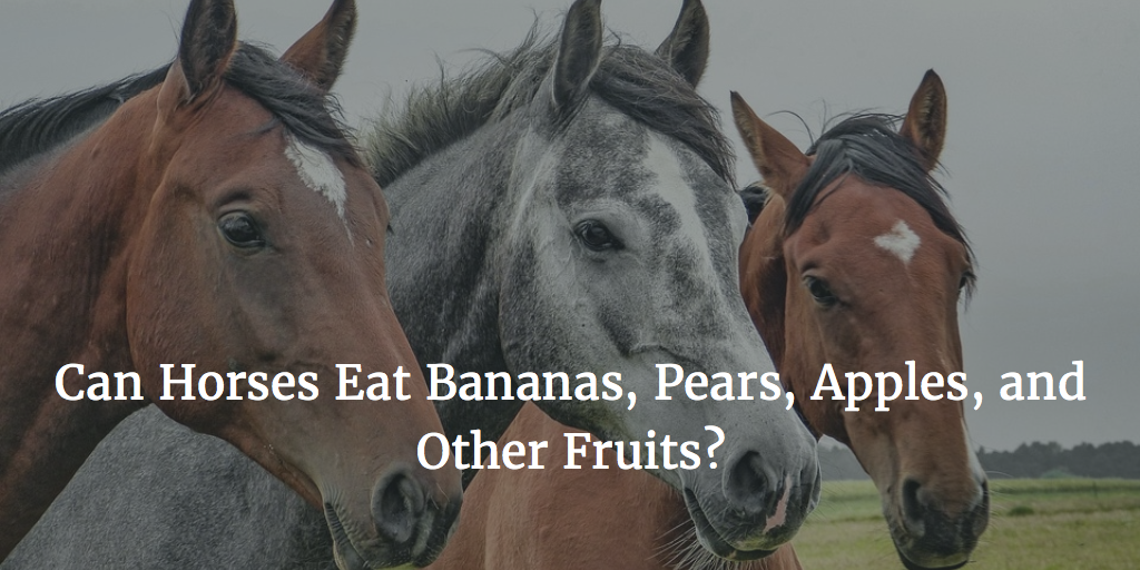 Can Horses Eat Bananas Pears Apples And Other Fruits