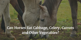 Can Horses Eat Cabbage, Celery, Carrots and Other Vegetables?