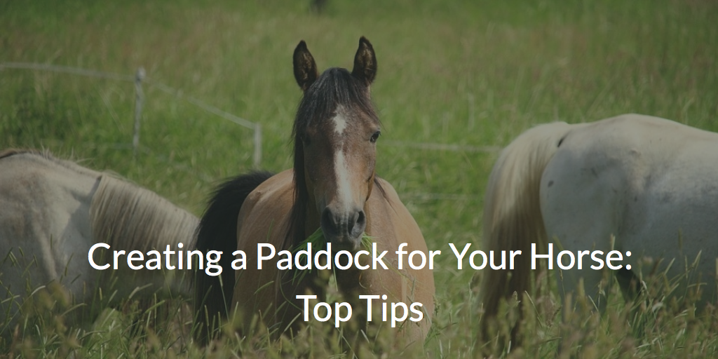 Creating a Paddock for Your Horse: Top Tips & Advice