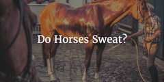 Do Horses Sweat?