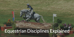 Equestrian Disciplines Explained: Dressage, Show Jumping & Eventing