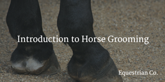 How to Groom a Horse - The Essentials Explained