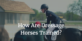 How Are Dressage Horses Trained?