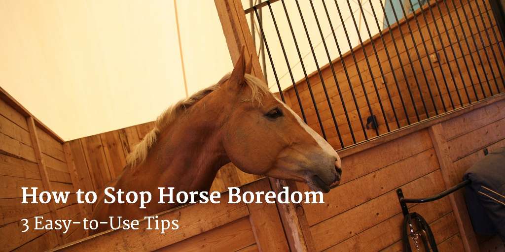 How to Stop Horse Boredom – 3 Easy-to-Use Tips