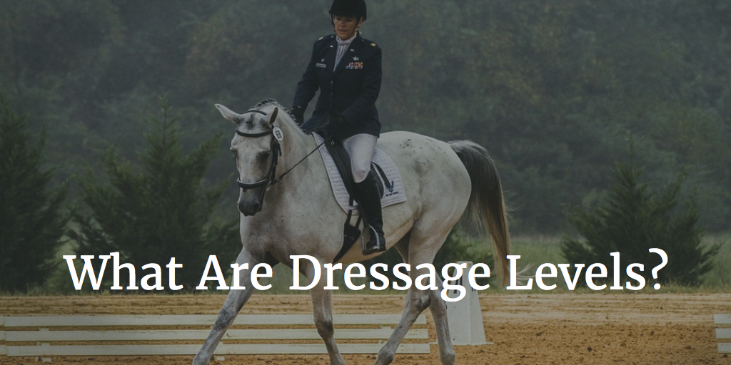 What Are Dressage Levels? Introductory to Grand Prix Explained!