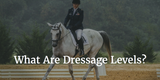 What Are Dressage Levels?