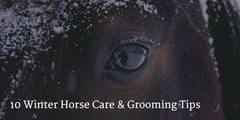 10 Winter Grooming Tips and Tools To Keep Your Horse Looking Super!