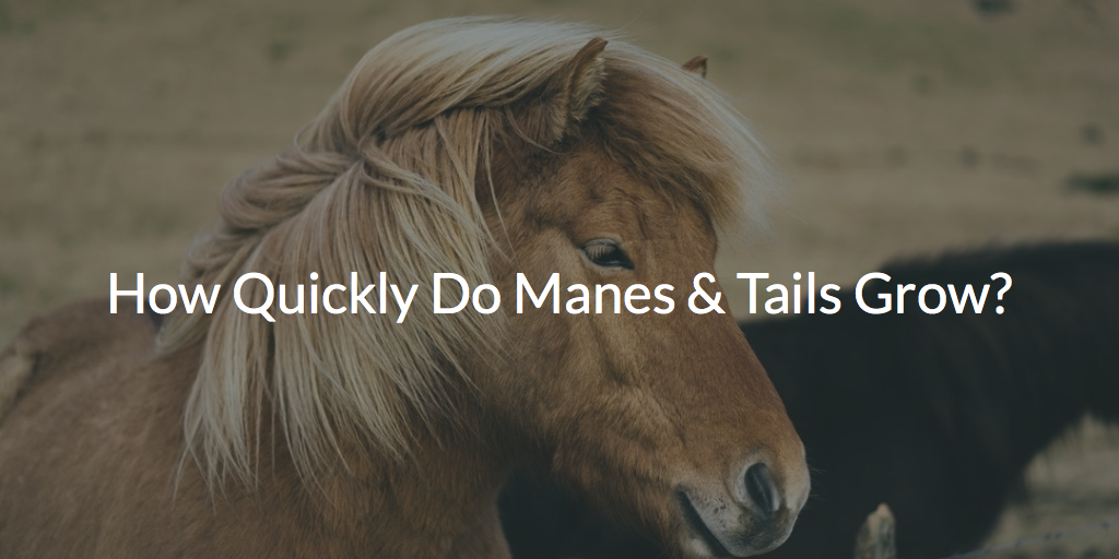 How Quickly Do Manes & Tails Grow? 7 Tips to Speed Up Growth