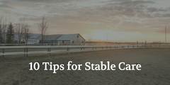 10 Essential Tips for Stable Care - Taking Care of the Horses