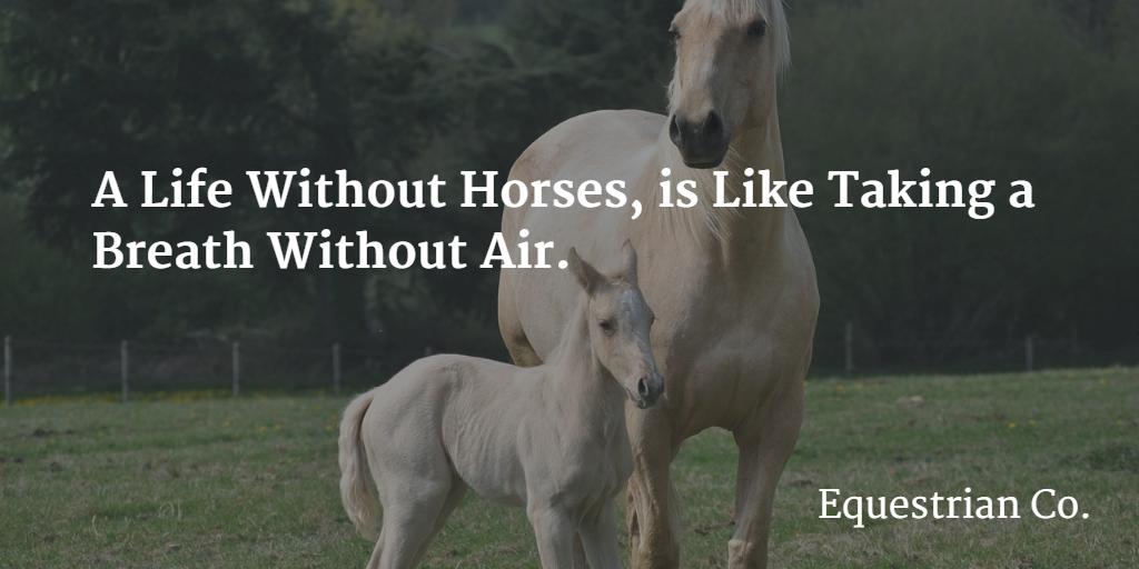 A life without horses, is like taking a breath without air.