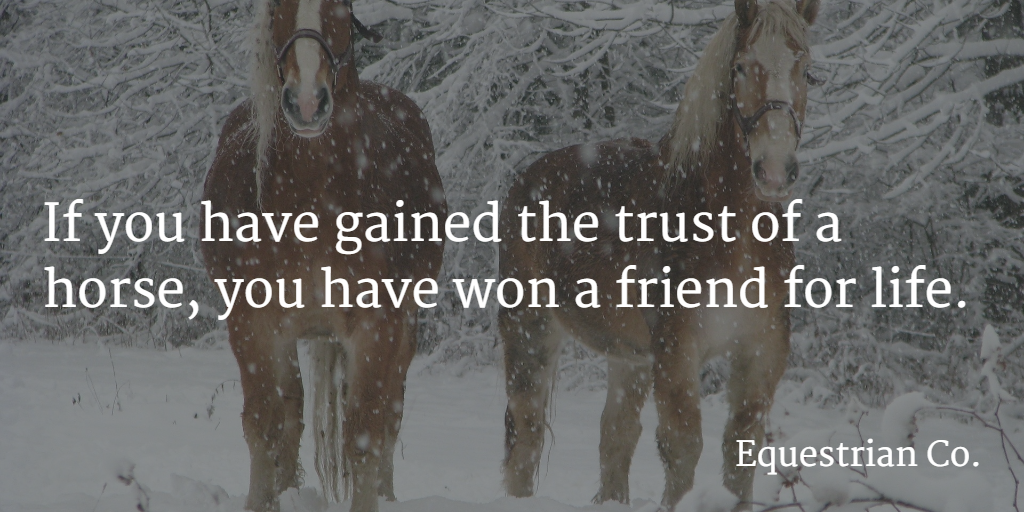 If you have gained the trust of a horse, you have won a friend for life.