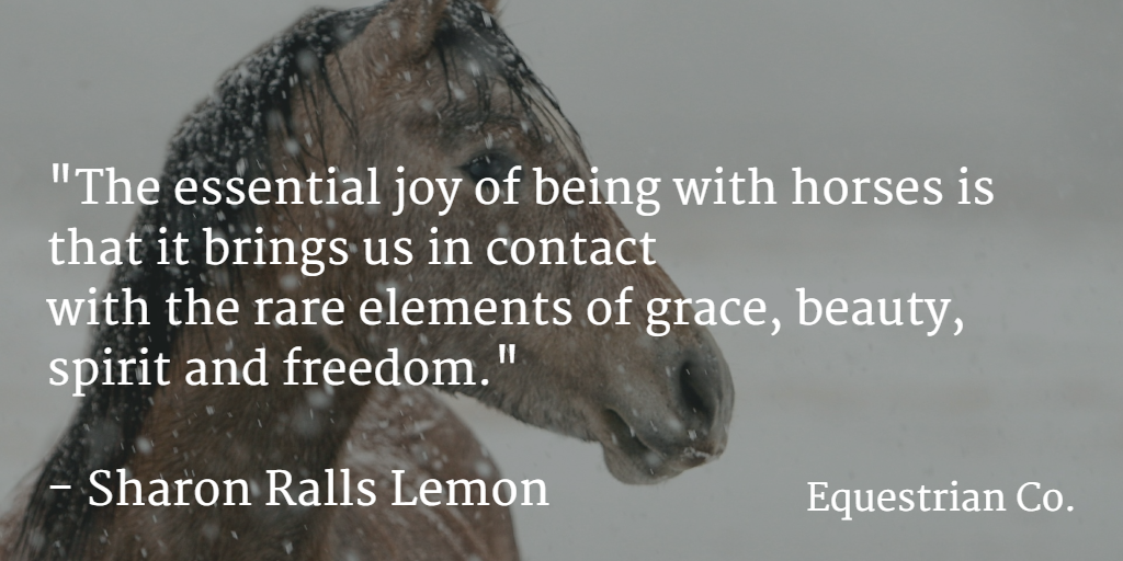 The essential joy of being with horses is that it brings us in contact with the rare elements of grace, beauty, spirit and freedom.